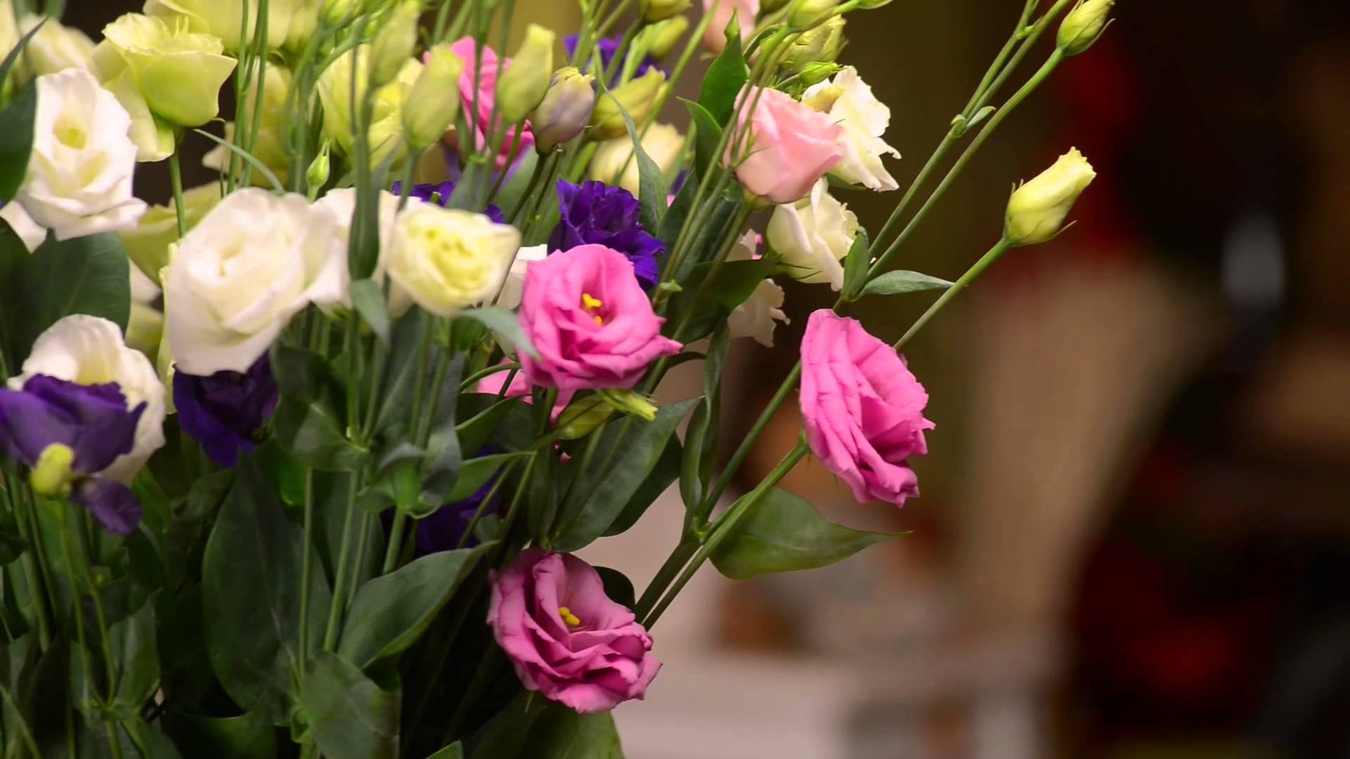 цветы эустома обои на рабочий стол использования технологий политического